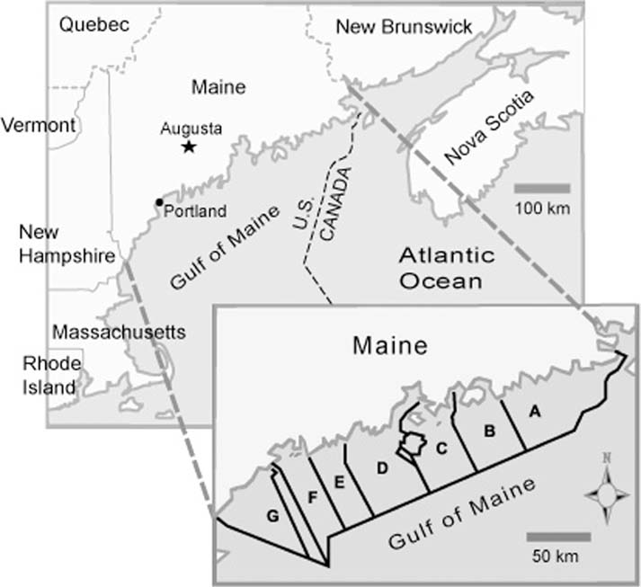 Revisiting Maine's lobster commons: rescaling political ...